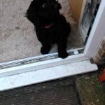 Bella puppy care