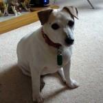 Betty the elderly dog