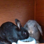 Clover and Thumper